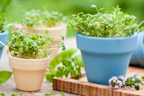 Jardin conseil pour le jardinage l 39 am nagement et la for Entretien persil jardin