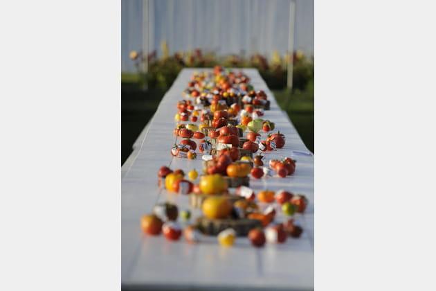 Le Festival de la tomate et des saveurs convie le rat de Ratatouille!