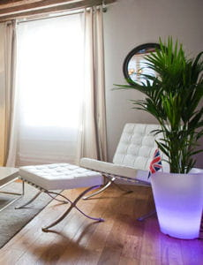 contenant géant pour plante d'intérieur qui s'illumine en violet