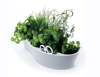 pot 'herb garden' de la boutique déco de l'internaute copains