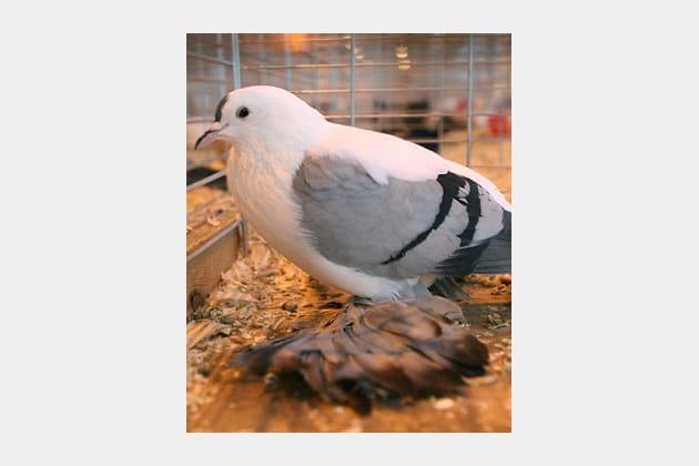 Droles d'oiseaux