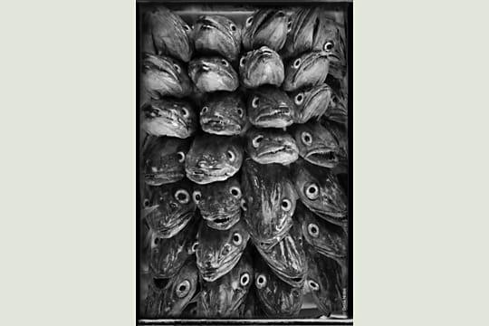 Merlu par Denis Nidos