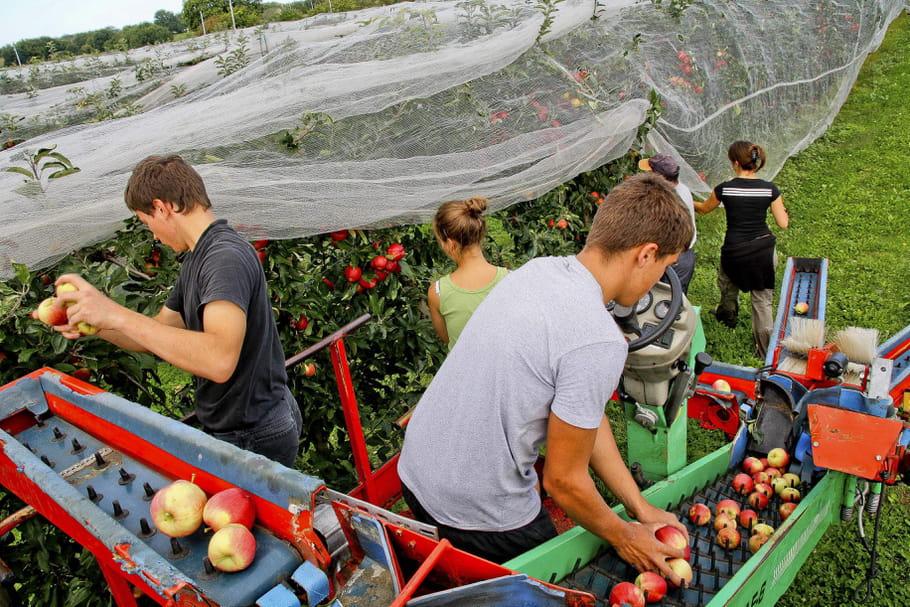 """""""Des bras pour ton assiette"""": l'appel à l'aide des agriculteurs"""
