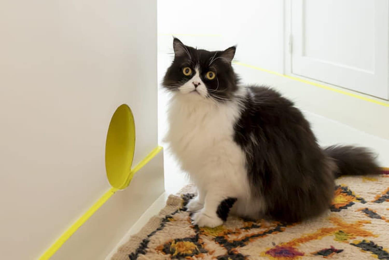 Comment décorer sa maison quand on a des animaux?