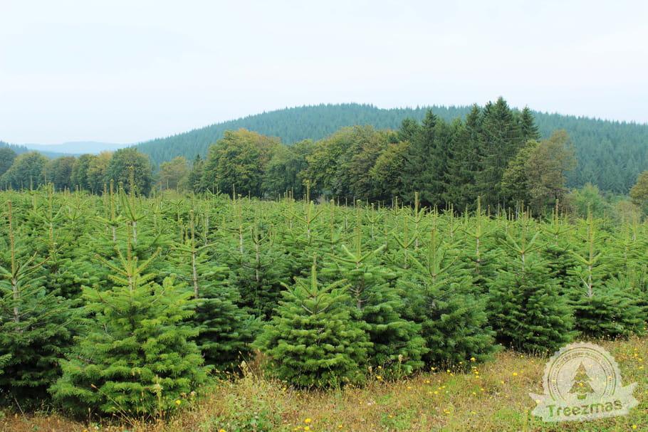 Botanic et Treezmas: ils réinventent Noël!