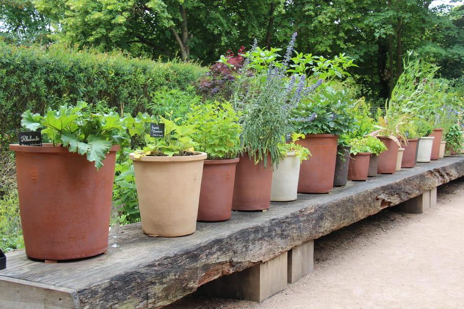 Engrais naturel: lesquels utiliser et quand les appliquer sur les plantes?