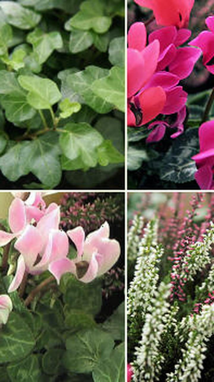 Que Mettre Avec Des Bruyeres création d'une jardinière d'automne