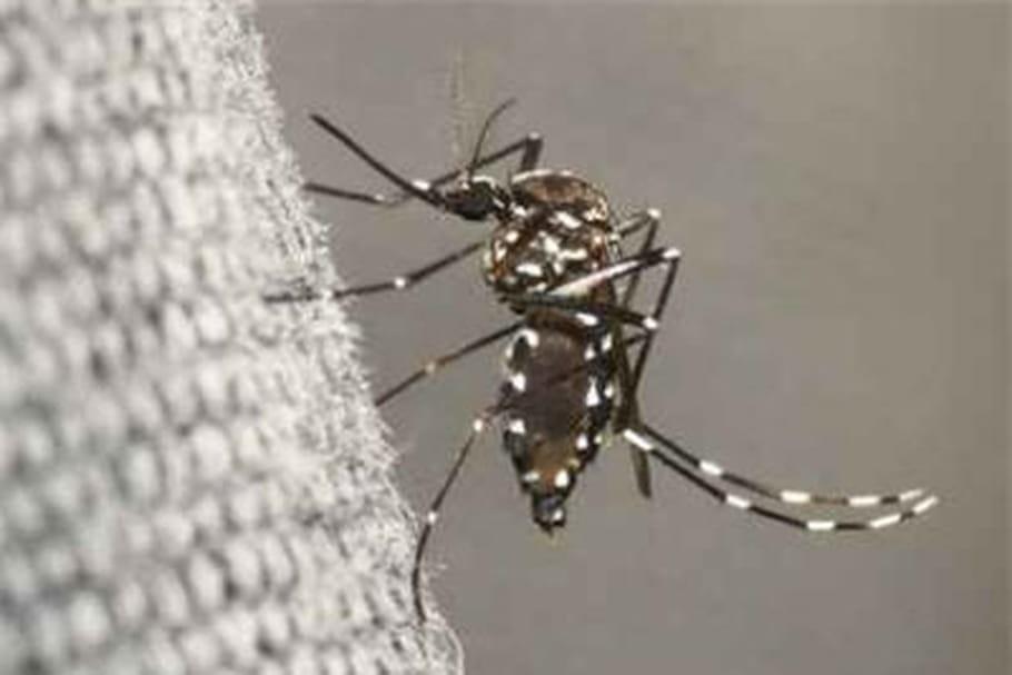 Chikungunya : l'inquiétude grandit