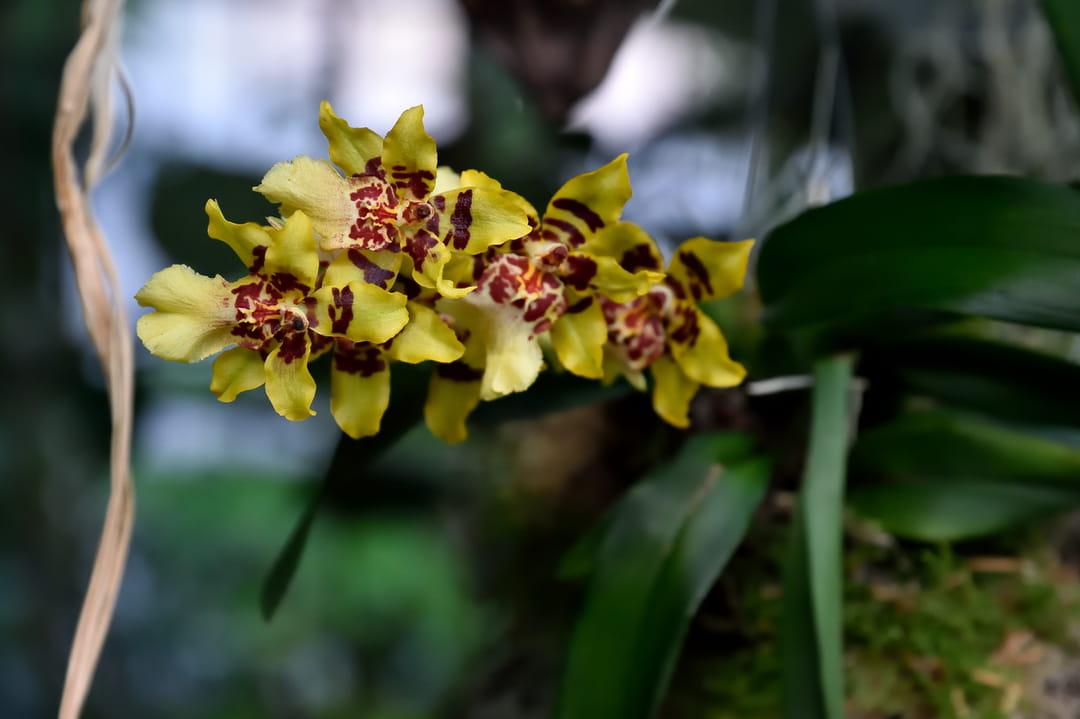 exposition-mille-et-une-orchidees