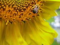 Le stress et l'anxiété accentueraient les réactions allergiques