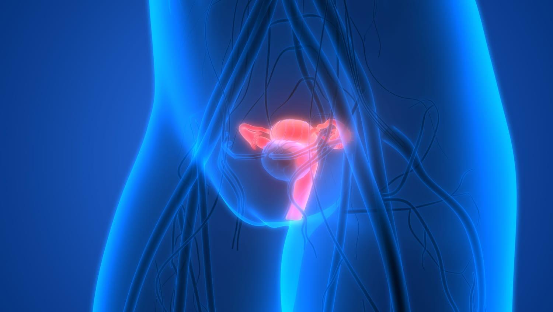 Col de l'utérus: définition, schéma, longueur