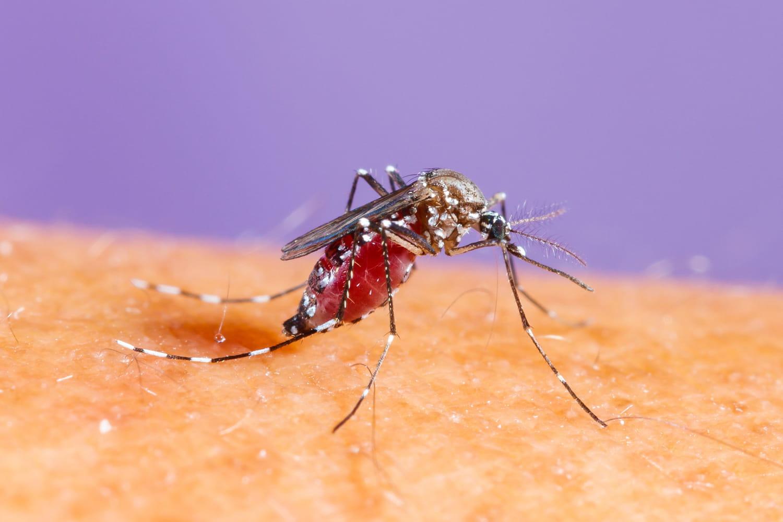 Piqûre de moustique tigre: symptôme, allergie, que faire?