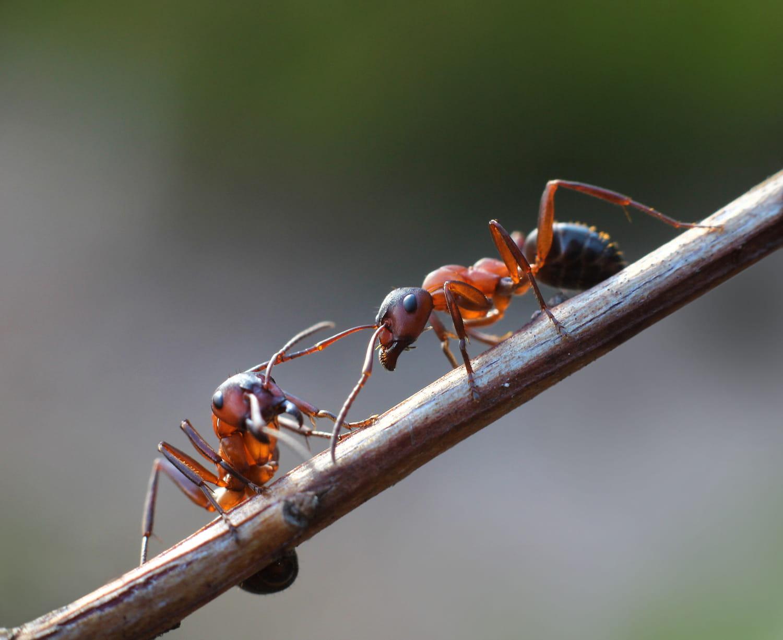 Se débarrasser des fourmis au jardin