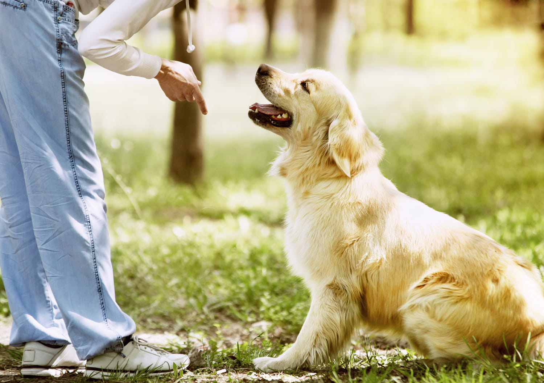 Comment faire obéir son chien?