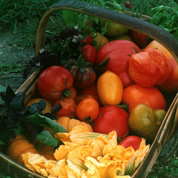 Conserver des tomates - La bourdaisiere tomates ...