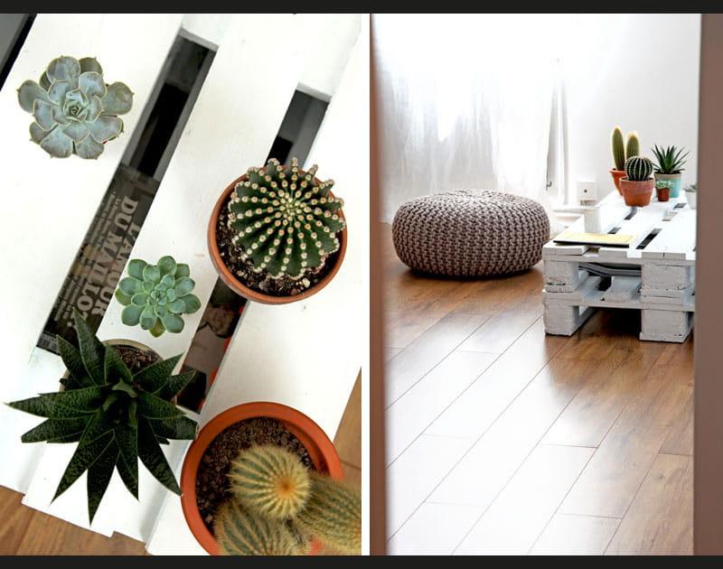 Cactus & Co