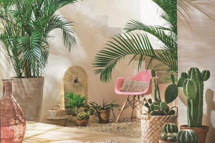 Palmiers et cactus