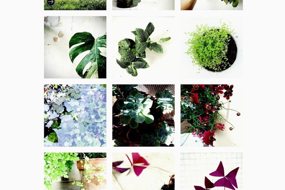 5comptes Instagram qui donnent envie d'avoir la main verte
