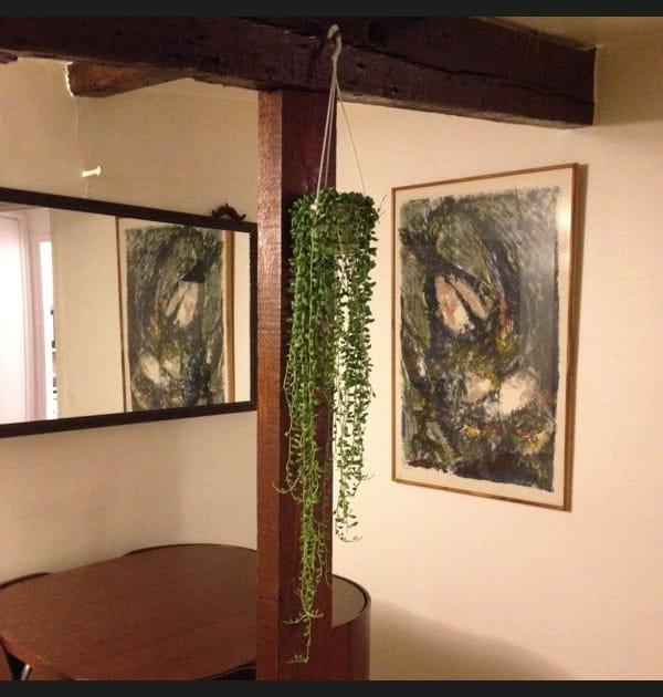 La plante verte de Kanitha