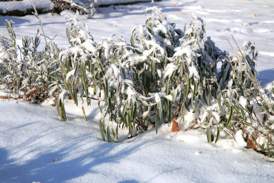 Ces dictons de janvier vont vous aider à mieux jardiner