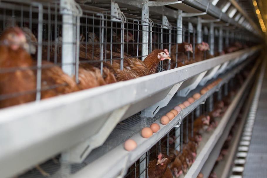 Plusieurs cas de grippe aviaire signalés en Dordogne