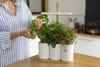 Un potager connecté pour des plantes qui poussent toutes seules