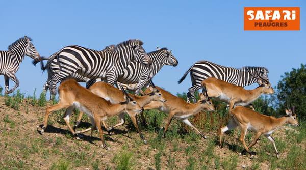 animaux-safari-de-peaugres