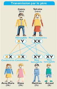 schéma de la transmission du gène de l'hémophilie quand le père est touché.