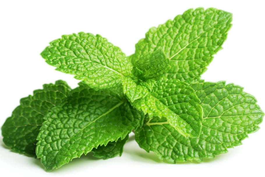 Everything about mint: choosing it, cooking it, storing it ...
