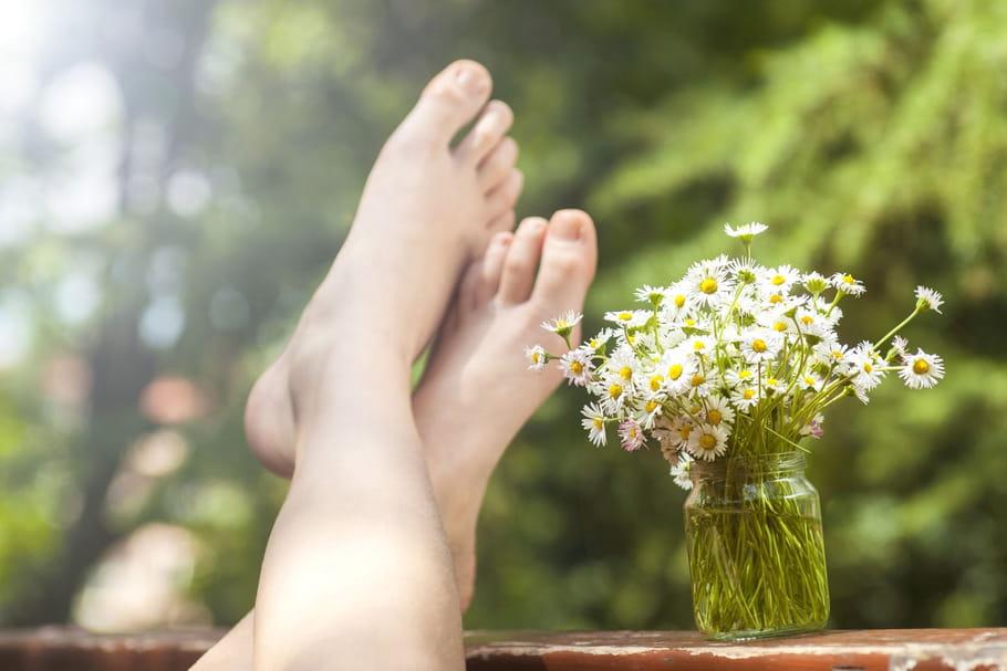3plantes pour alléger les jambes lourdes