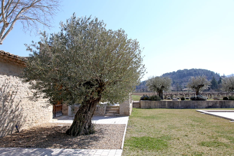 Que Planter En Octobre Sous Serre olivier : quand et comment le planter ?