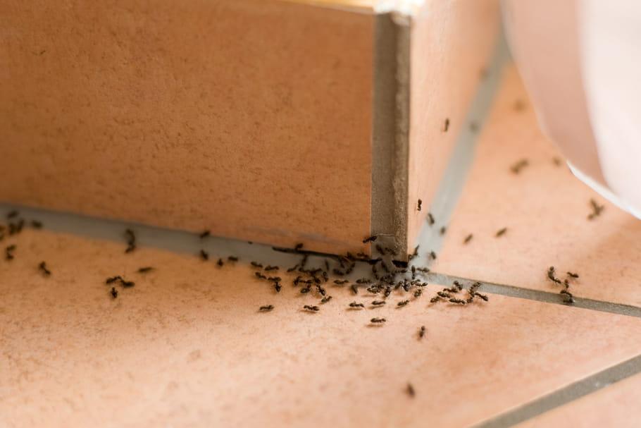se d barrasser des insectes de la maison. Black Bedroom Furniture Sets. Home Design Ideas