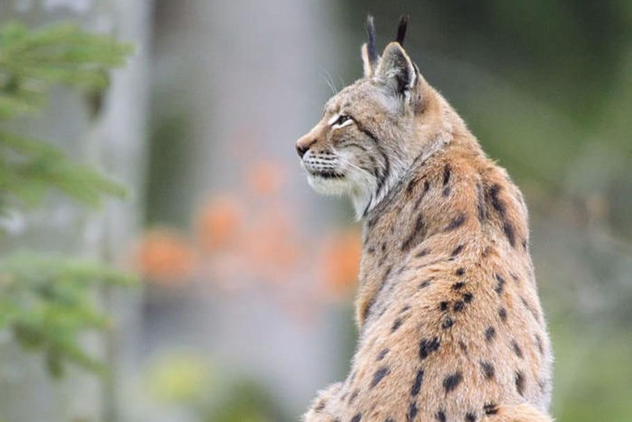 Parc animalier des Pyrénées: à chacun sa nature