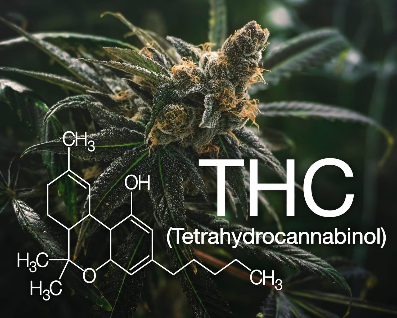 THC: définition, effets, corps, cerveau, dangers, légal?