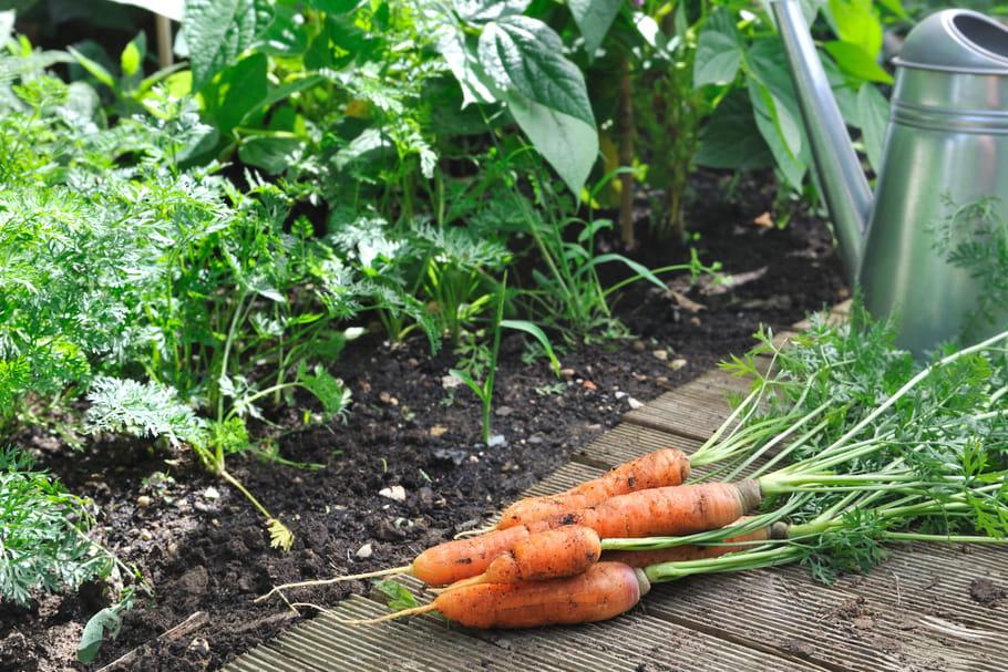 Plantes potagères: guide des végétaux à cultiver au potager