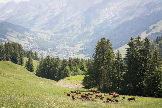 Un fromage emblématique de Haute-Savoie