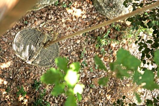 Pique-nique dans les bois