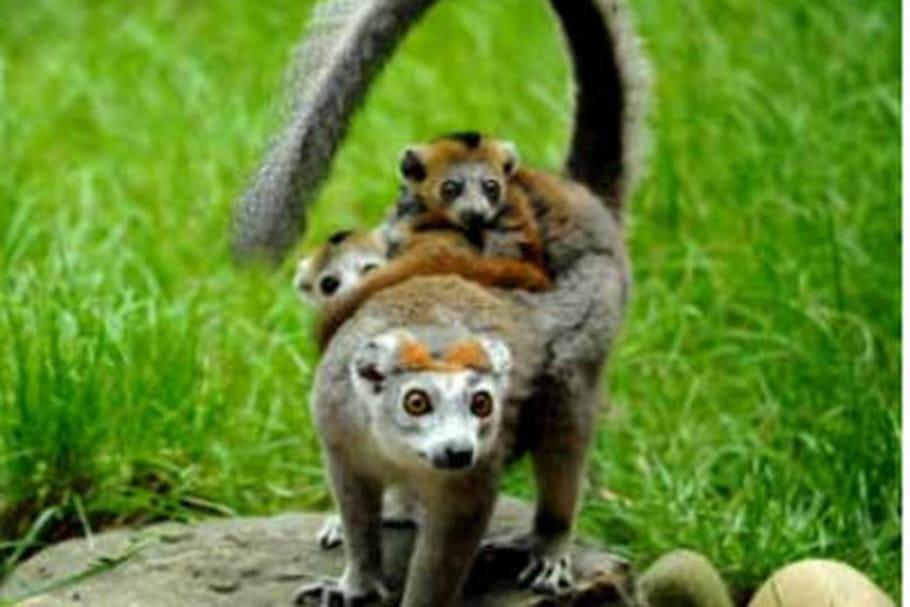 Nouvelles naissances au zoo de Mulhouse