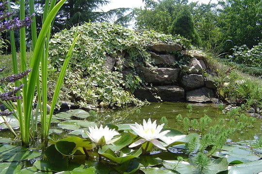 Cascade pour agrémenter un joli bassin