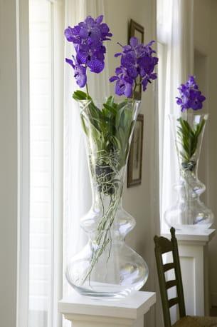 orchidee vanda en vase entretien