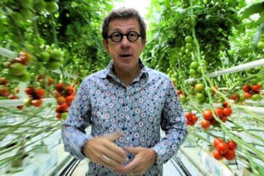 Des tomates et concombre dans les cours d'école