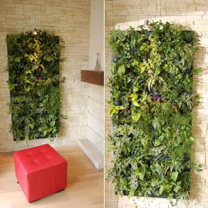 le flowall est un mur végétal qui offre des qualités esthétiques et