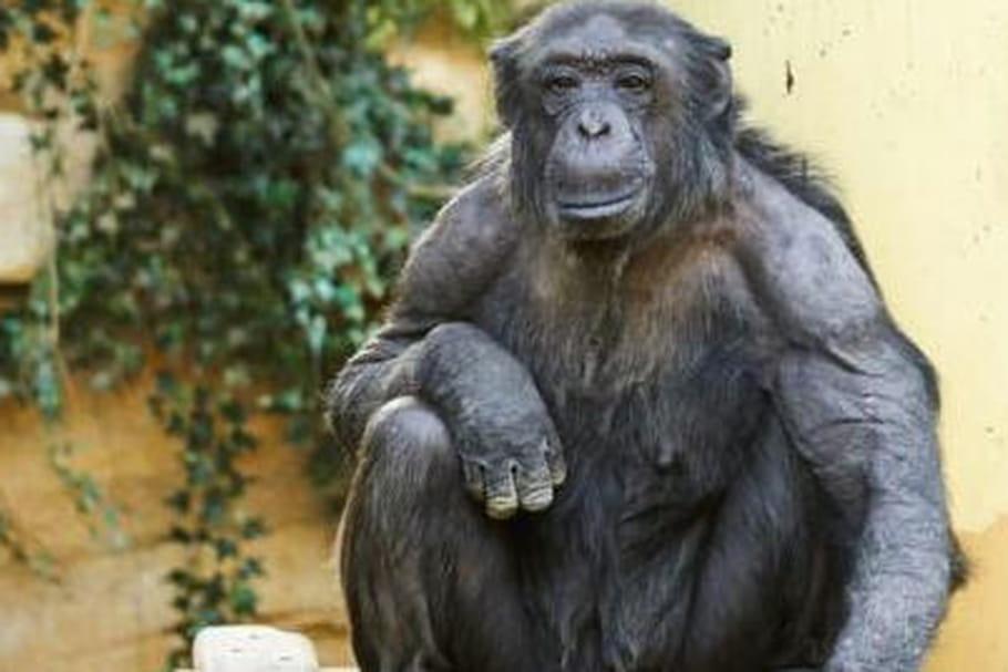 Zoo de la Palmyre : tout savoir sur ce parc zoologique