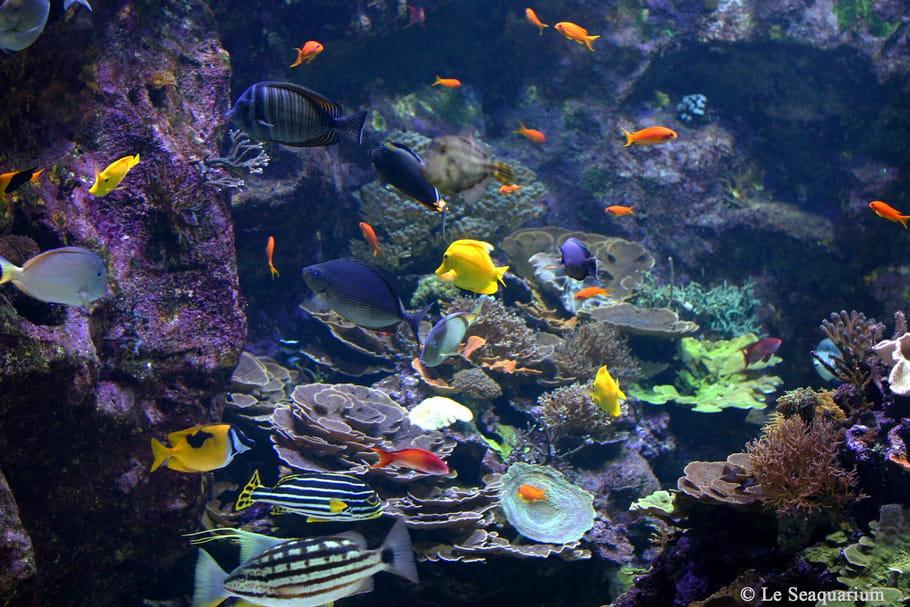 Seaquarium: à la découverte de 200espèces marines
