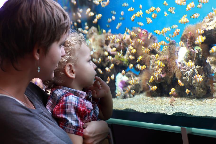 L'aquarium de Trégastel: le paradis des familles sous le granit breton