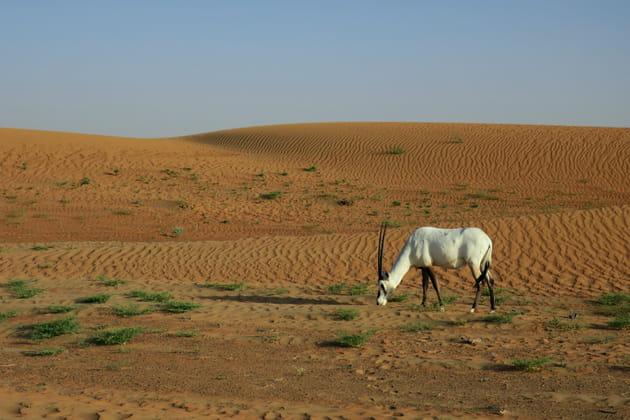 À la rencontre des animaux du desert