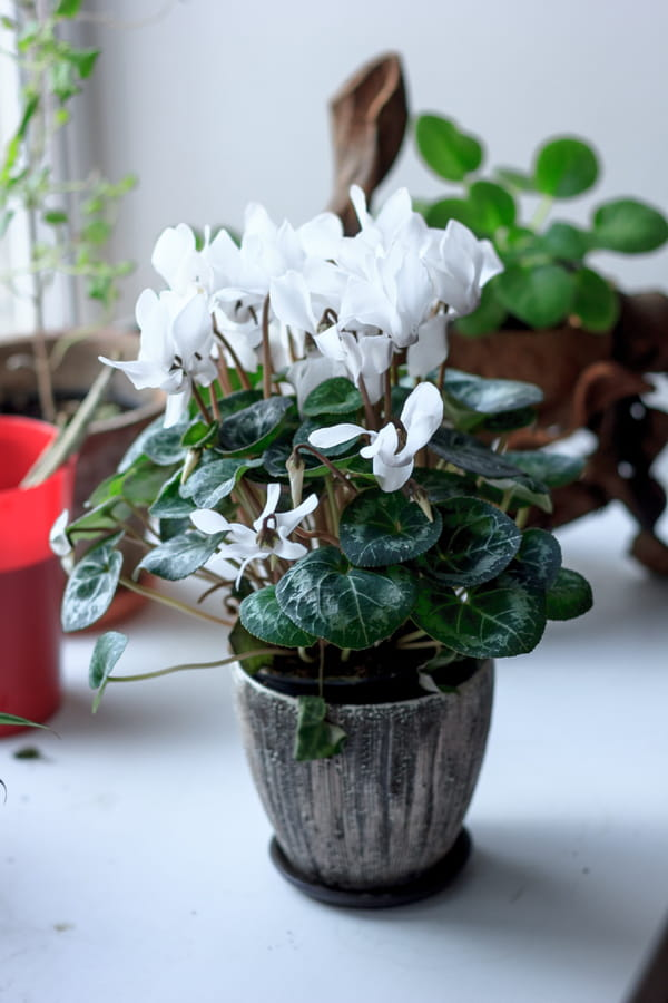 plante d polluante ces v g taux qui vont purifier votre. Black Bedroom Furniture Sets. Home Design Ideas