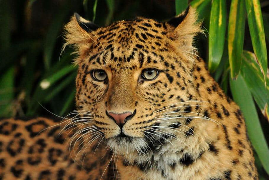 Ménagerie du Jardin des plantes: toutes les infos de ce zoo