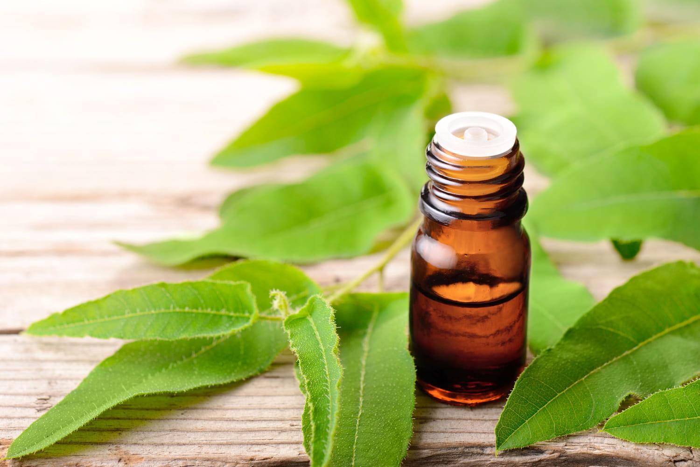 Quelles plantes pour soigner une sinusite?
