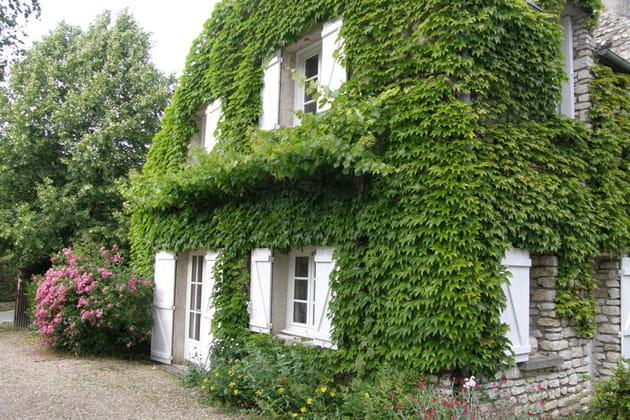 plante grimpante facade